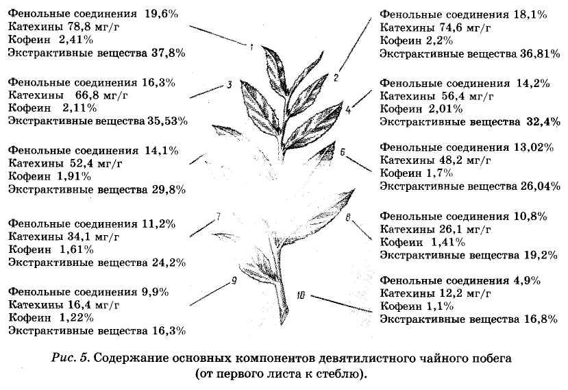 содержание основных компонентов девятилистного чайного побега