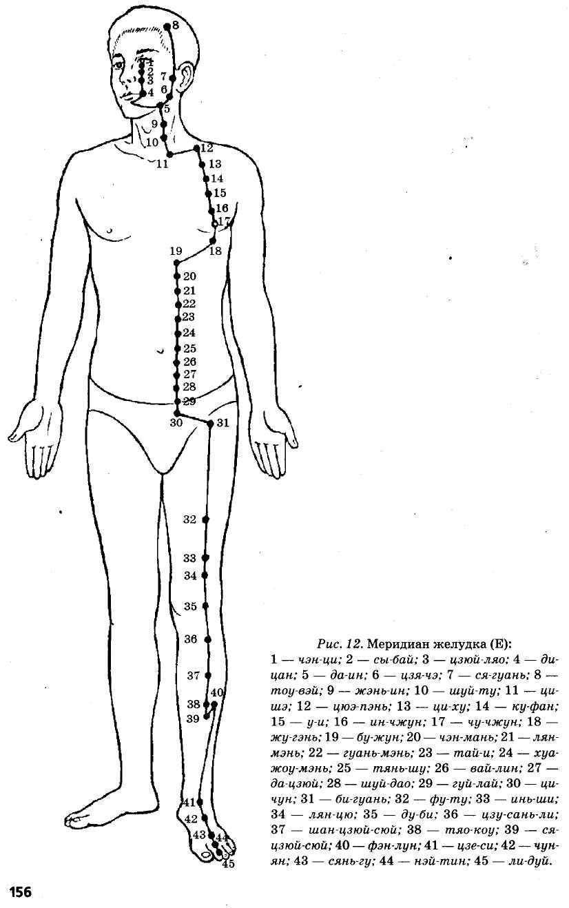меридиан желудка